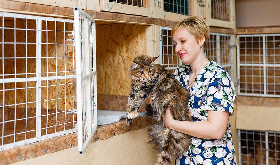 simply-learn-animal-welfare-cat
