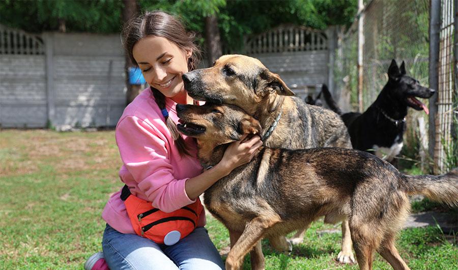 simply-learn-animal-welfare-dogs