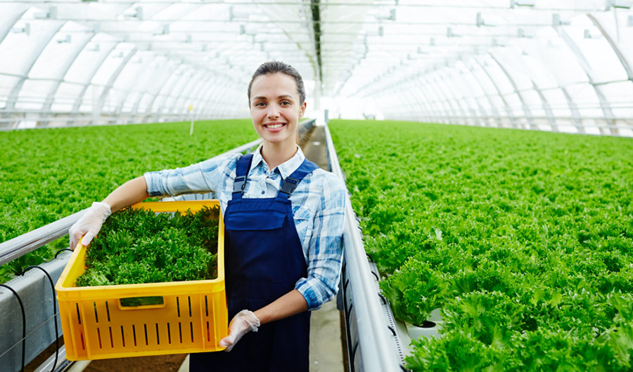 simply-learn-horticulture-specialised-lettuce