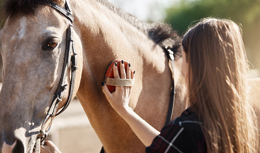 simply-learn-equine-studies-brush
