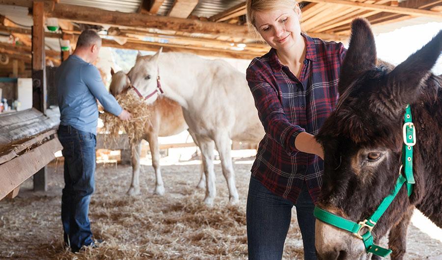 simply-learn-horse-breeding-donkey