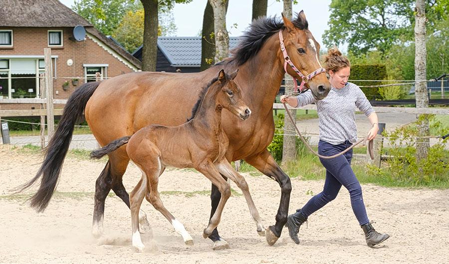 simply-learn-horse-breeding-foal