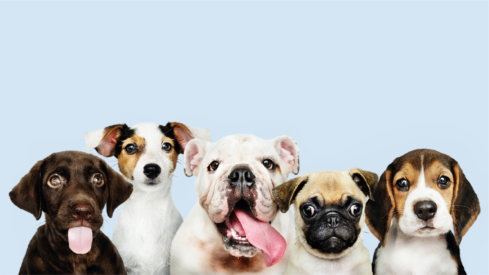 Starting And Running A Successful Pet Care Business